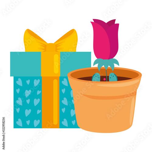 Fototapeta gift box with rose flower in pot plant isolated icon vector illustration design obraz