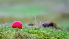 Golf Course Red Tee Marker In Grass And Moss Against A Soft Green Background