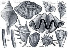 Shell Collection, Illustration...