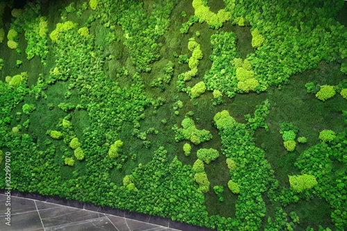 Fototapeta green moss wall in the lobby of a modern office obraz