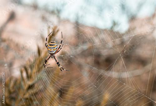 Spider Arachnid Spiderweb Canvas Print