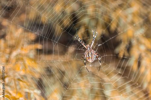 Spider Arachnid Spiderweb garden Canvas Print