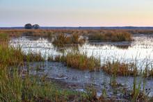 Wetland Scenery At Savannah National Wildlife Refuge Near Hardeeville, South Carolina