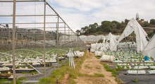 Greenhouses With Torn Plastic ...