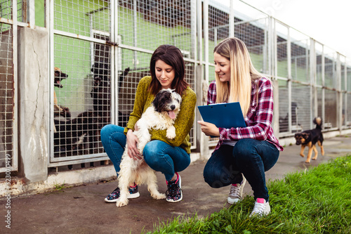 Obraz Young woman with worker choosing which dog to adopt from a shelter.. - fototapety do salonu