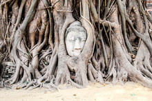 Famous And Touristic Buddha Head Between Growing Tree Roots. Ayutthaya Historical Park, Thailand