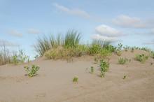 Coastal Dunes In Punta Rasa, W...