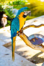 Blue And Yellow Macaw Parrot O...