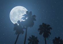 Nice Moon And Palms