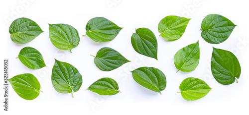 Green betel leaves, Fresh piper betle on white Wallpaper Mural
