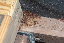 A Serious Bedbug Infestation A...