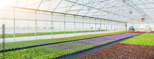 Greenhouses for growing flowers. Floriculture industry Canvas Print