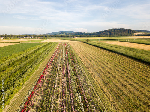 Aerial drone image of fields with diverse crop growth based on principle of polyculture and permaculture - a healthy farming method of ecosystem Fototapete
