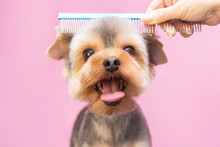 Dog Gets Hair Cut At Pet Spa G...