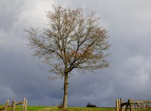 Tree In A Field With Threatening Sky And Wooden Fence