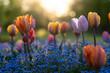 Tulpen im Luisenpark Mannheim
