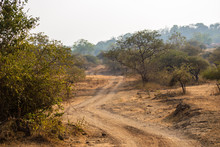 A Dusty Trail Winds Through The Jungles Of The Gir National Park In Gujarat, India.