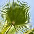 palma liść dzień kontrast