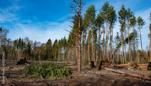 trees uprooted by storm in the forest Slika na platnu