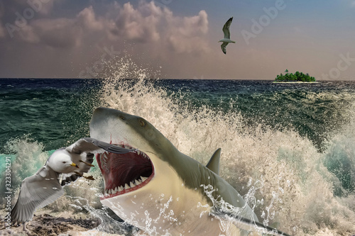 Attack of a great white shark on an albatross Poster Mural XXL