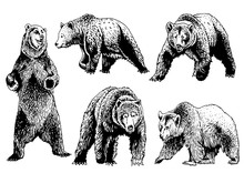 Graphical Set Of Grizzly Bears...