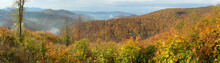 Panoramatic View On Forest In ...