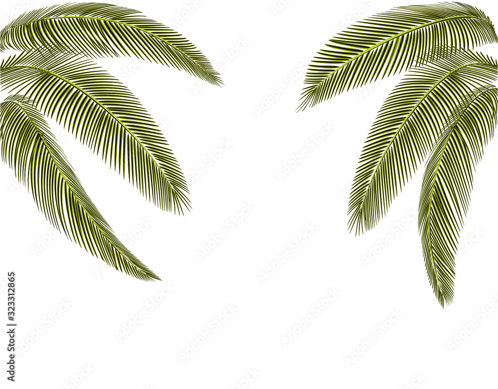 Tropical Different shapes of dark green palm leaves. At both sides. Isolated on a white background without mesh and gradient. illustration
