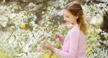 Adorable Young Girl Having Fun In Blooming Cherry Garden On Beautiful Spring Day. Kid Hanging Easter Eggs On Blossoming Cherry Branches.