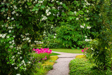 Pretty Garden Path Covered By ...