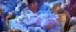 canvas print picture - Impasto Paint Texture