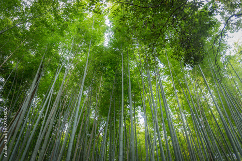 Vista desde el interior del bosque de bambu