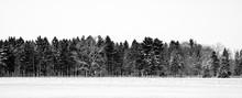 Winter Farm Tree Line And Snow