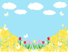 春素材19 菜の花 チューリップ