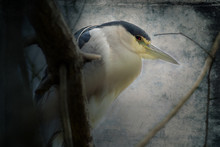 Heron Up Against The Wall