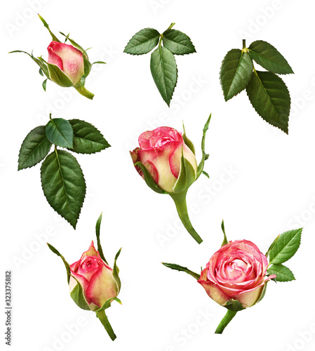 Set of pink rose buds and green leaves