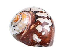 Dried Shell Of Nautilus Mollus...