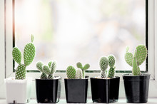 Collection Of Various Cactus A...