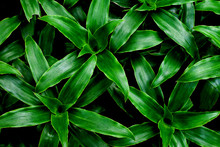 Closeup Nature View Of Green L...