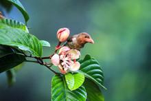 A Small Bird Having Nectar