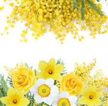 Mimosa, Rose And Narcissus Flowers Bouquet Isolated On White
