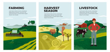 Set Of Posters With Farming, Livestock, Harvest Season. Illustrations Of Hay, Hayfield, Agricultural Landscapes, Combine Harvester And Tractor On Field. Farmer And Cows On Farm. Vector Banner, Cover.
