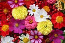 Flower Banner. Garden Flowers,...