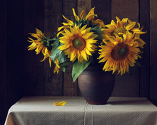 Bouquet Of Sunflowers In A Clay Jug