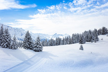 Winter Fir And Pine Forest Covered With Snow After Strong Snowfall Over Mont-Blanc Mountain Range On Background On Sunny Frosty Day