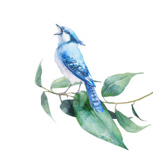 Isolated Spring Artwork: Bird And Tree Branch. Clip Art For Greeting Design. Watercolor Botanical Illustration