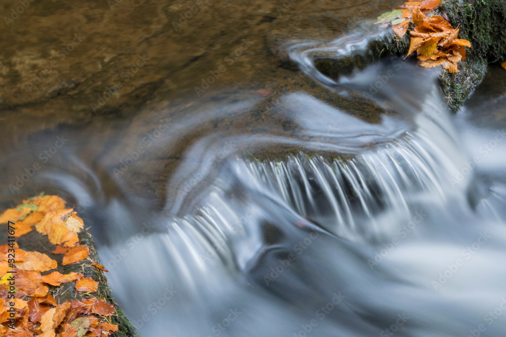 Fototapeta water flowing  with golden leaves around it
