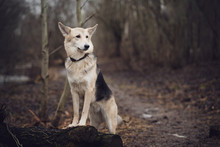 Dog In The Forest On The Footp...