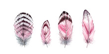 Watercolor Feather Set. Hand P...