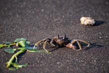 Macro Shot Of A Crab At The Beach