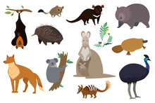 Australian Animals, Set Of Isolated Cartoon Characters Kangaroo, Koala And Wombat, Vector Illustration. Wildlife Animals Of Australia, Tasmanian Devil, Dingo Dog, Platypus And Echidna. Isolated Set